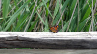 Fort Worth Nature Center 2014.06.15